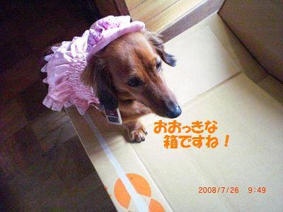 CIMG1341_20080726155521.jpg