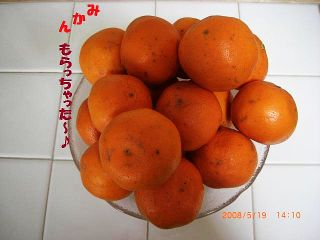 CIMG5685_20080520043405.jpg