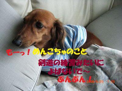 CIMG6532_20080529180711.jpg
