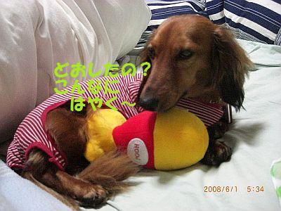 CIMG6803_20080602001831.jpg