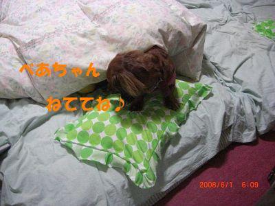 CIMG6823_20080602003041.jpg