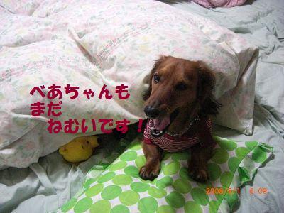 CIMG6825_20080602003221.jpg