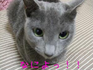 2008_03170032.jpg