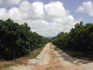 クサミズキ畑