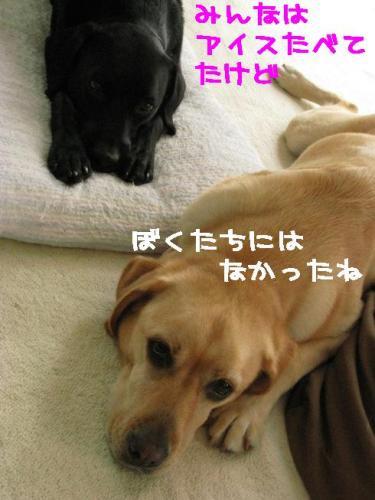 IMG_0564k_20080712221830.jpg