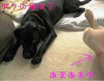 IMG_4377.jpg