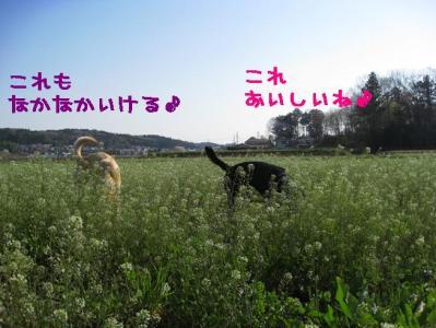 IMG_4822kk.jpg