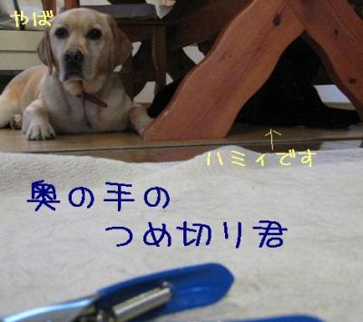 IMG_4980.jpg