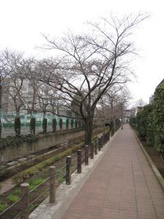 散歩3.19 008