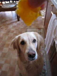 オレンジください。 004