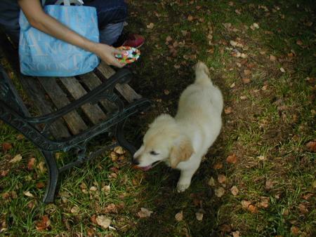 子犬ズーニー2