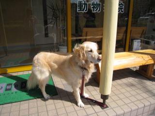 狂犬病予防 006