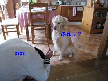 忠犬検定1の結果は? 004