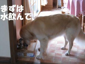 室内ぴっぴ 001