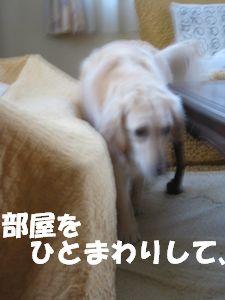 室内ぴっぴ 002
