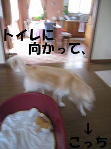 室内ぴっぴ 003