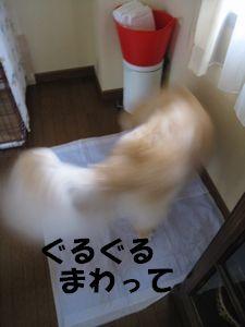 室内ぴっぴ 005