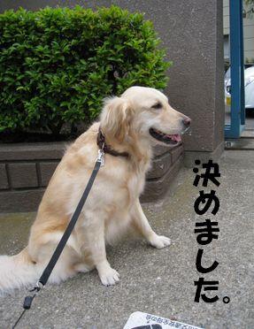 小学校の番犬志願 003
