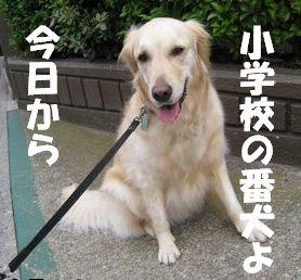 小学校の番犬志願 004