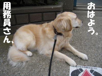 小学校の番犬志願 005