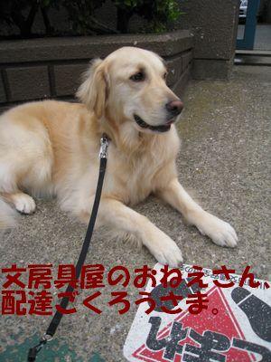 小学校の番犬志願 006