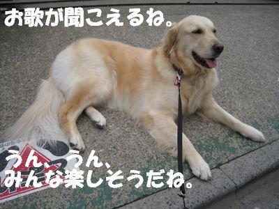小学校の番犬志願 008