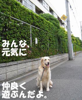 小学校の番犬志願 009