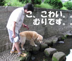 チキン☆ズーニー 009
