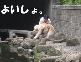 チキン☆ズーニー 011