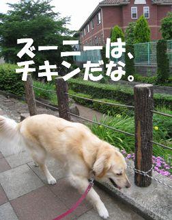 チキン☆ズーニー 016