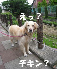チキン☆ズーニー 017