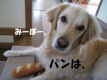 パンは食べるもの 006