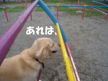 小枝ちゃん 005