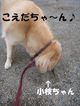 小枝ちゃん 004