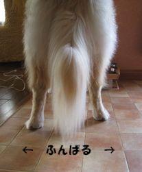 ふんばる犬 001