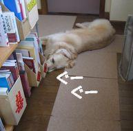 ふんばる犬 006