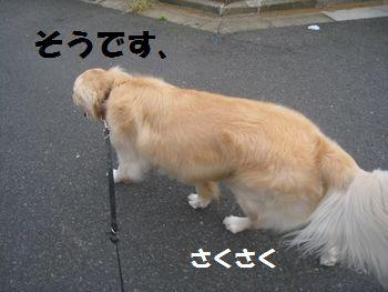 IMG_4569.jpg