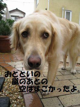 IMG_4804.jpg