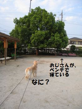 IMG_4832.jpg