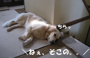 IMG_4847.jpg