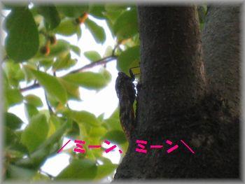 IMG_4977.jpg
