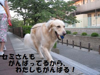 IMG_4986.jpg