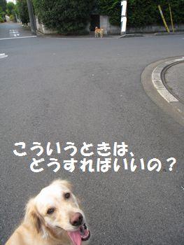 IMG_5089.jpg