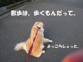 IMG_5105.jpg