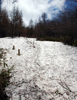 入笠山の雪道