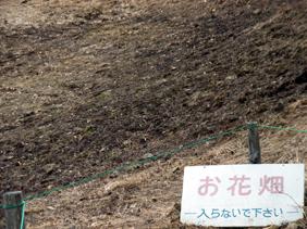 入笠山のお花畑