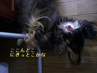 CIMG0063_20080802193228.jpg