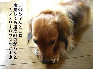 CIMG0065_20080802193237.jpg