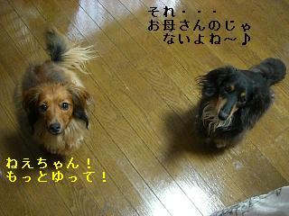CIMG0099_20080808205202.jpg