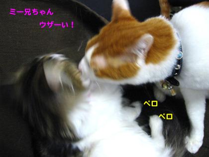 IMG_200642099.jpg
